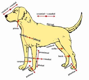 dog body parts