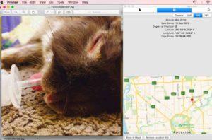 GPS image metadata