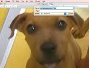 dodgy puppy hoax