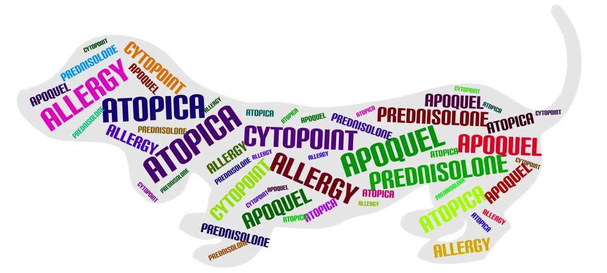 cytopoint apoquel atopica