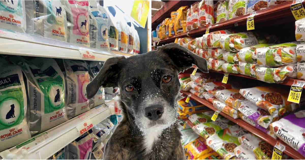 supermarket vs premium pet food