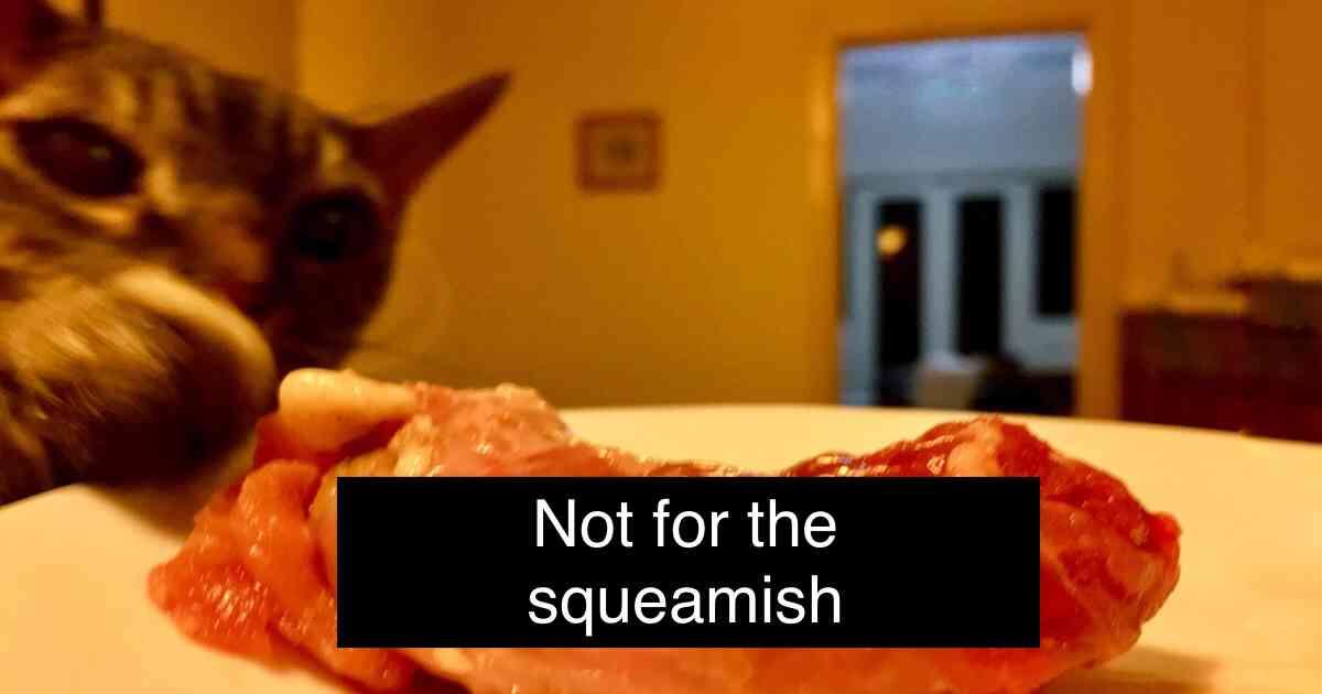 cat raw meat