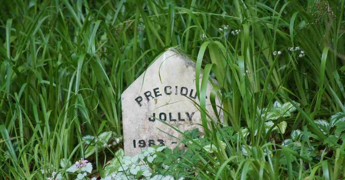 dog burial gravestone