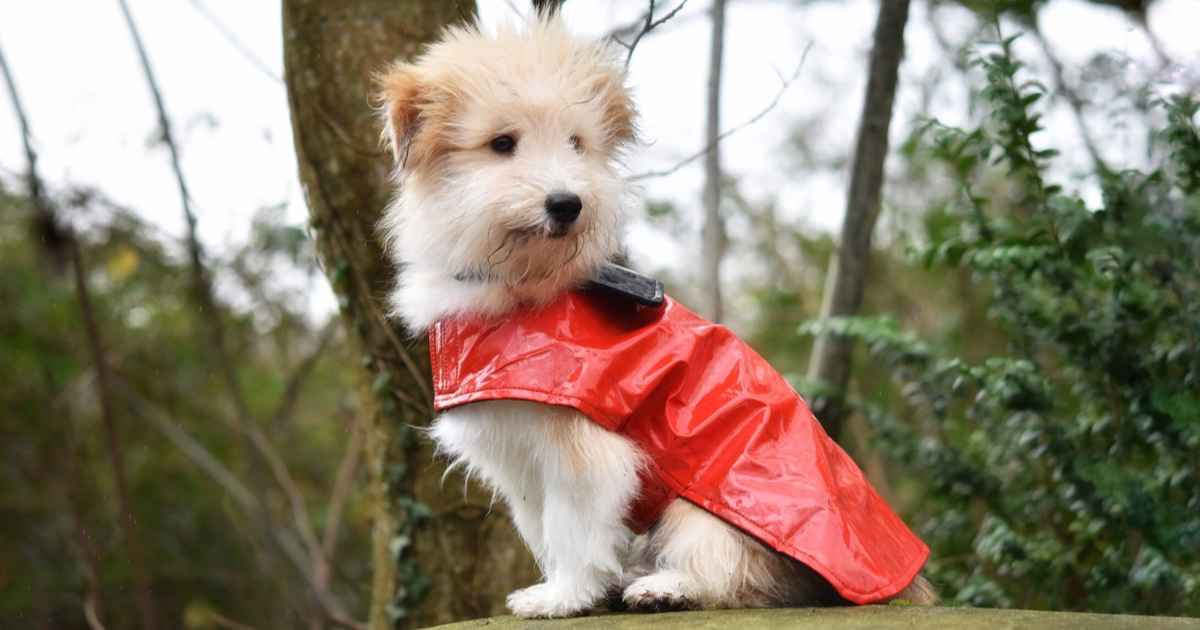 dog in red jacket