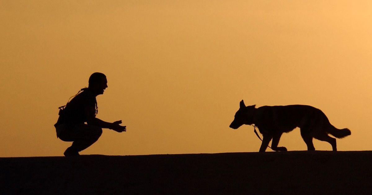 dog trainer recall