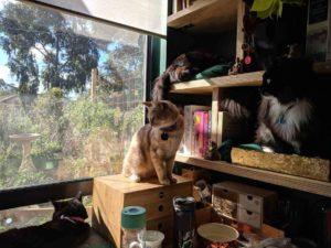 cat window shelves