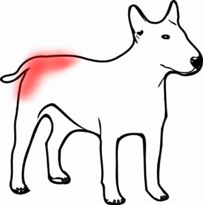 dog flea dermatitis pattern