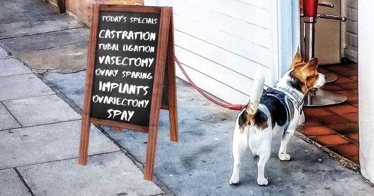 dog neuter options