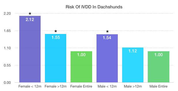 IVDD dachshund desexing