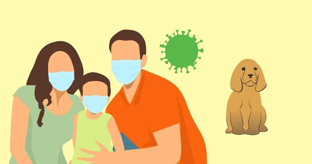 puppy socialisation coronavirus