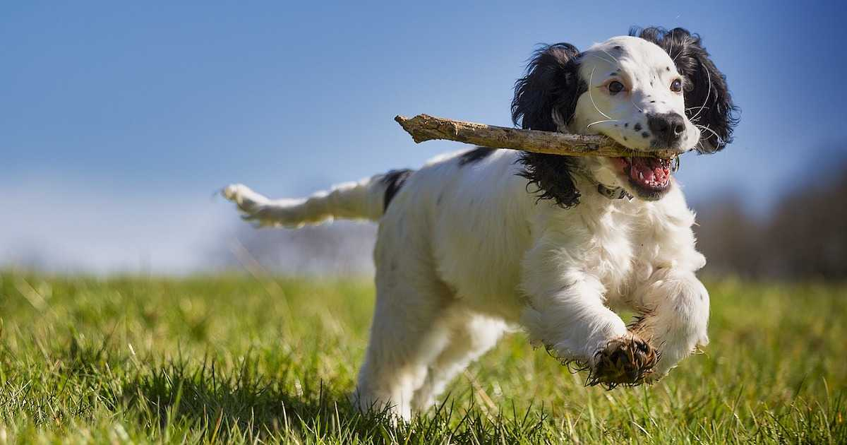 dog throw stick
