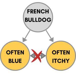 itchy blue french bulldog