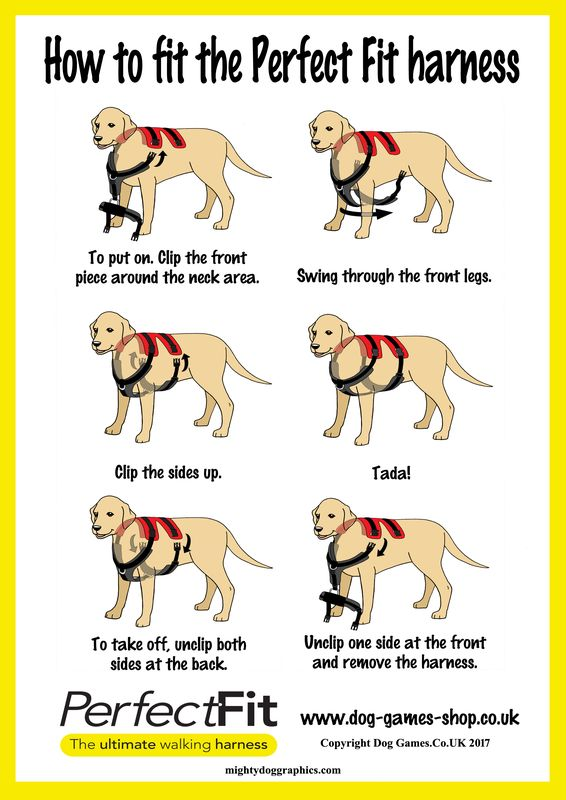 fitting dog harness
