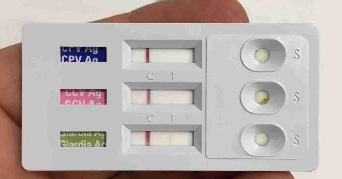 coronavirus giardia parvovirus test