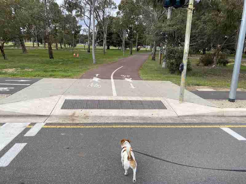 anzac highway pedestrian