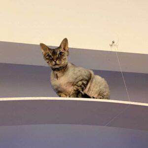 cat overhead ledge
