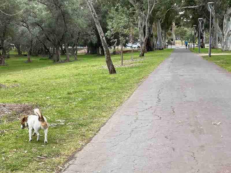 victoria park path