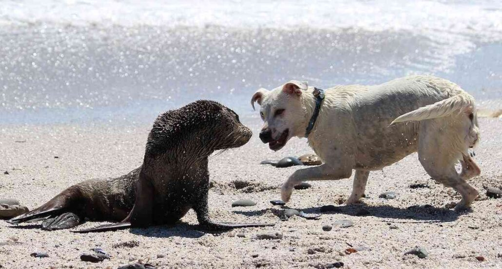 dog attacking seal