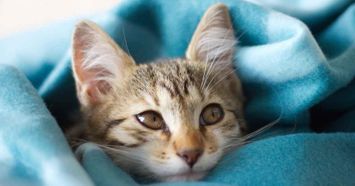 kitten eye infection