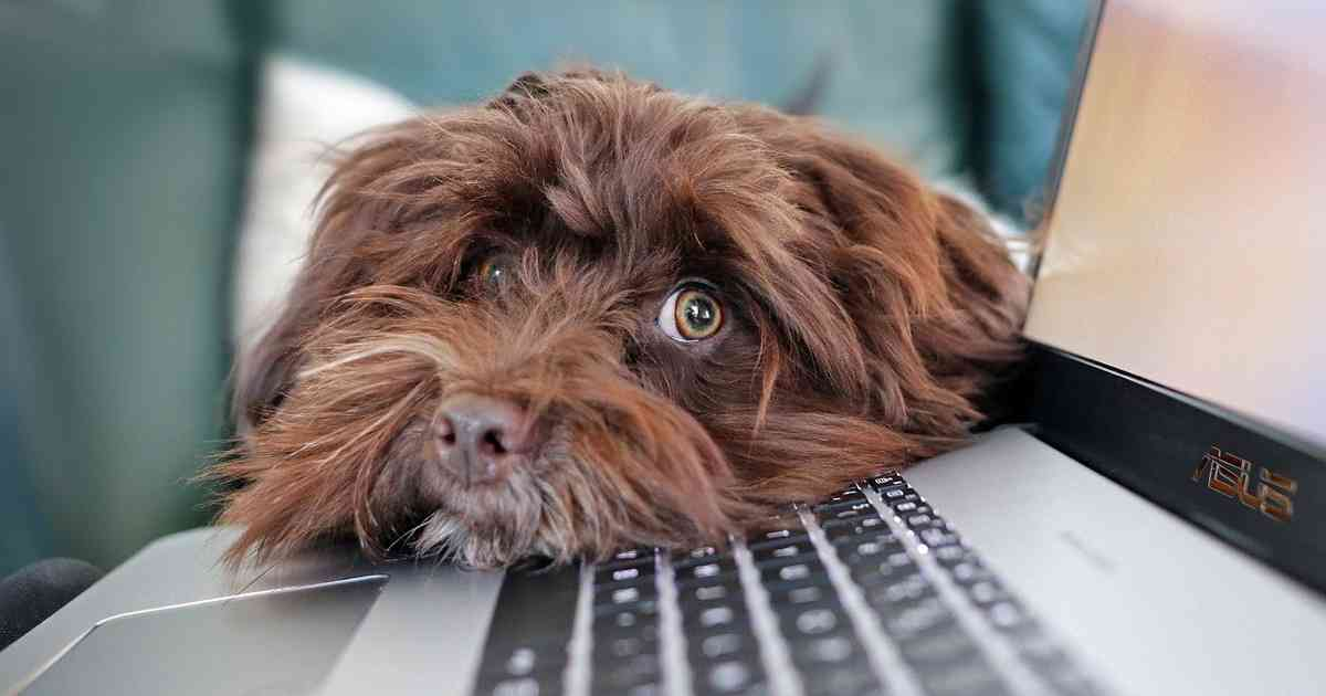 Dog and laptop