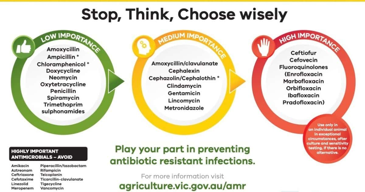 vet antibiotic guidelines