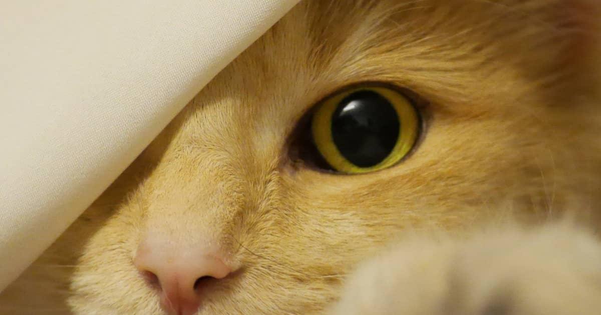 cat wide eye